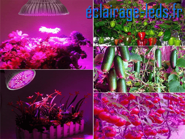 Ampoule LED E27 Horticole 20w plein spectre