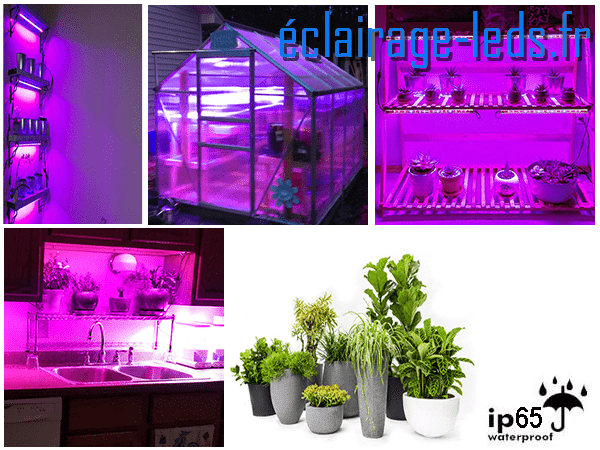 Tubes LED 50cm Horticole 40W dimmable