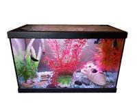 tube led et rampe led pour aquarium